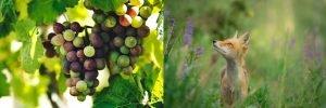 Scopri come raggiungere i tuoi obiettivi evitando gli errori che fanno (quasi) tutti, senza cadere nelle scuse che si racconta la volpe con l'uva