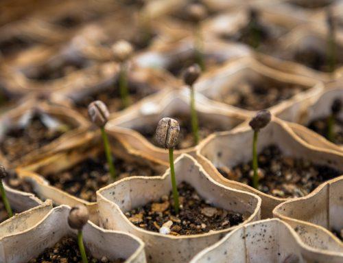 La crescita strutturata contro la crescita fai da te